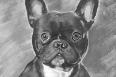 Portrait de mon bouledogue français