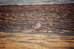 Petit oiseau à la plage